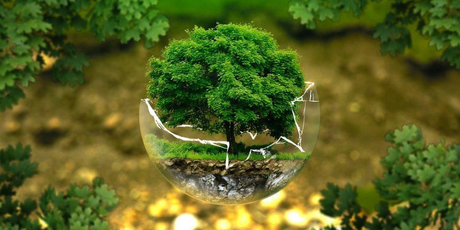 Tutela ambientale, un'albero in una bolla