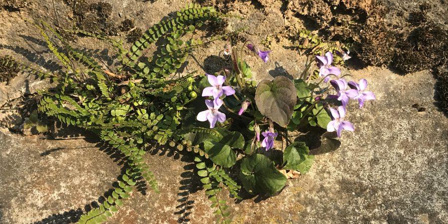 Violette aggrappate al muro
