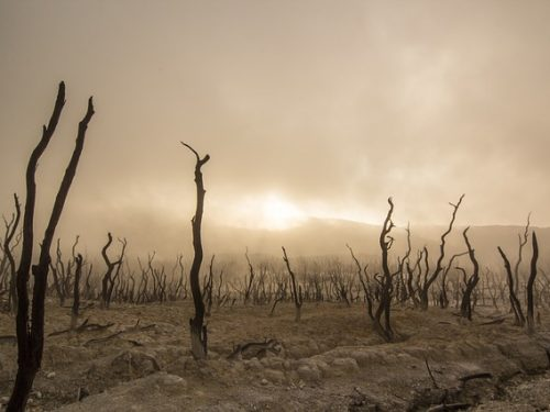 Il reato ambientale nella Foresta fossile.